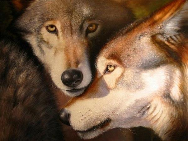 Волки♦(3)