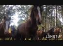 Лошади 🐴 лошади ❤️
