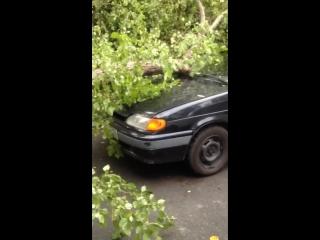 Дерево упавшее на-машину,и там был заснят мой пёсик Плюш то=)