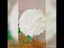 Розы в прокат