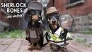 Ep 11: Sherlock Bones Watley - Cute Dog Detectives Video!