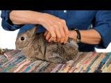 Серия #6 Уход за кроликом|