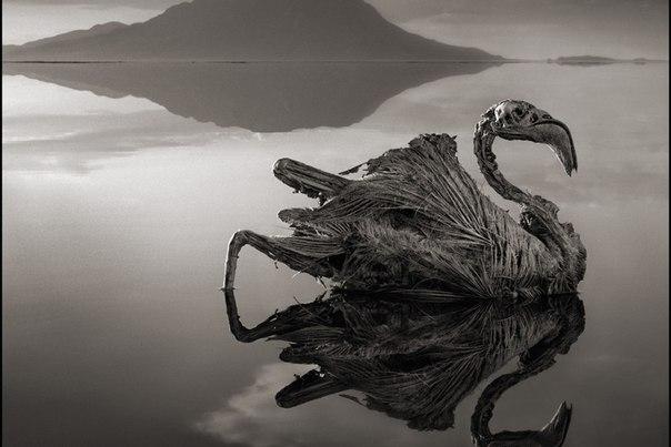 Увидеть озеро Натрон и окаменеть