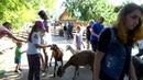 Зоопарк Лимпопо в Нижнем Новгороде 2-я часть