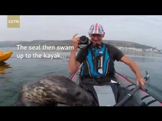 Морской котик решил присоединиться к людям на надувной лодке