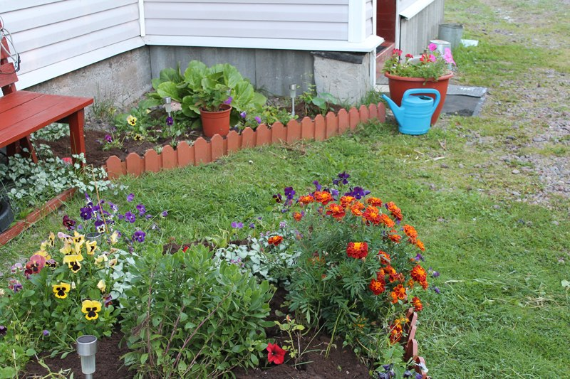 Фотоальбом «Осень - а что в саду и огороде»-Новый цветник