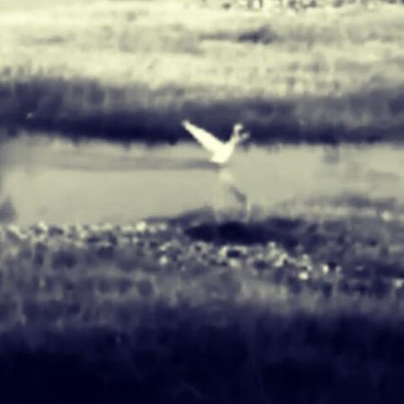 "Svetlana Aulirika Kovaliova on Instagram: ""Цапля на речке Сочинке. сочи цапля речка сочинка птицы"""