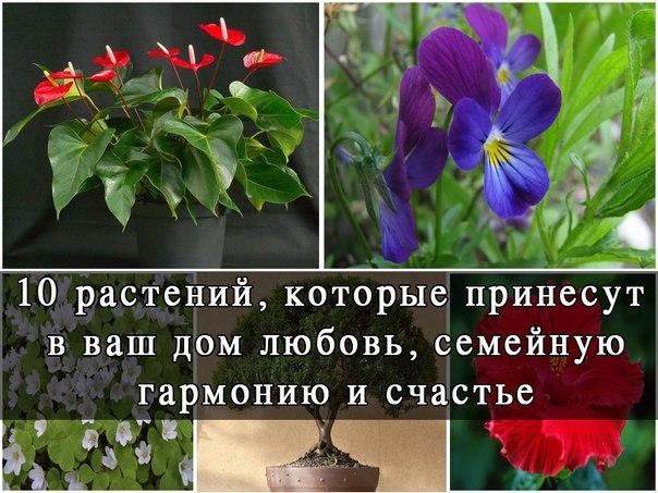 Какие цветы держать дома для любви