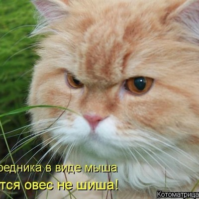 Александр Кузьмин, Санкт-Петербург, id52714411