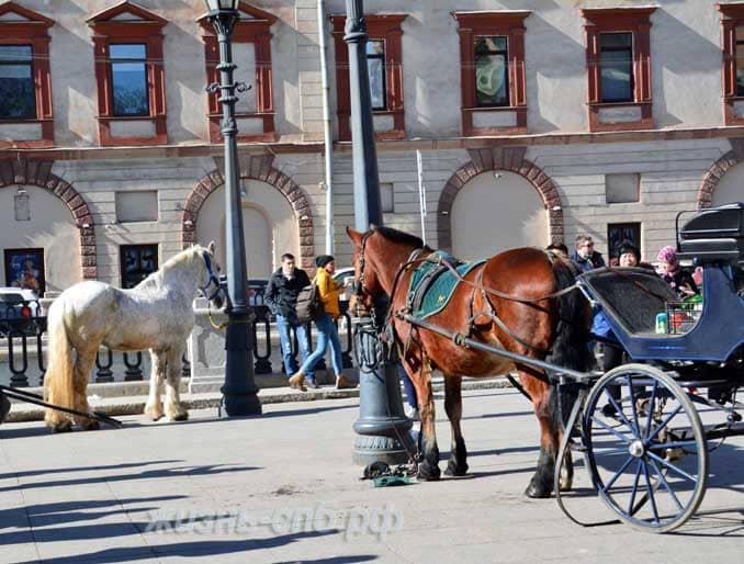 Лошади у Спаса