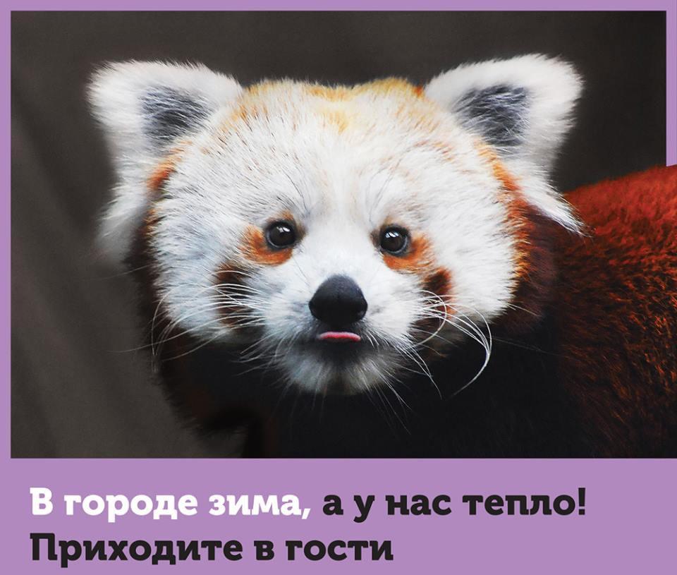 http://cs543105.vk.me/v543105794/2090f/yXO4YaTaf4Y.jpg