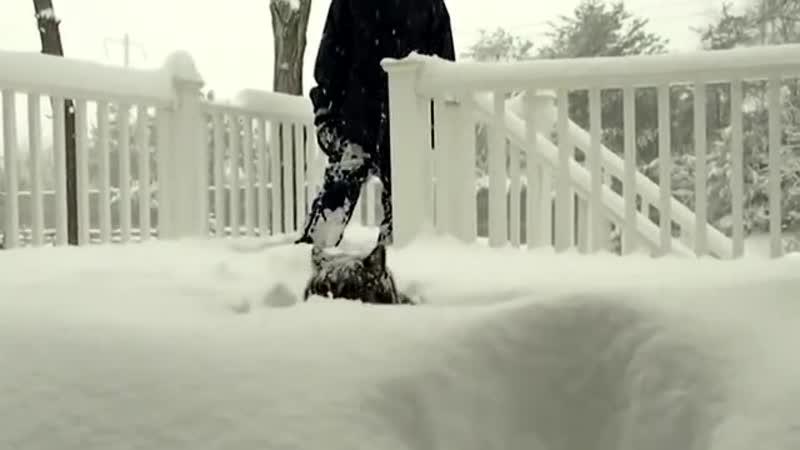 снежные коты mp4