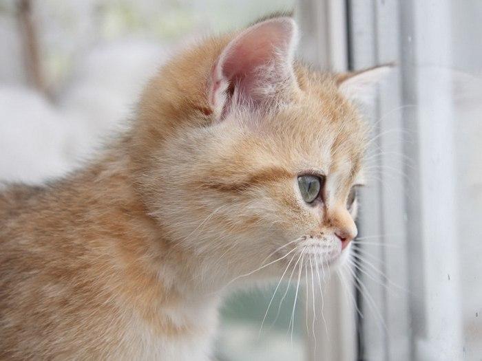 Почему говорят «У кошки девять жизней»?