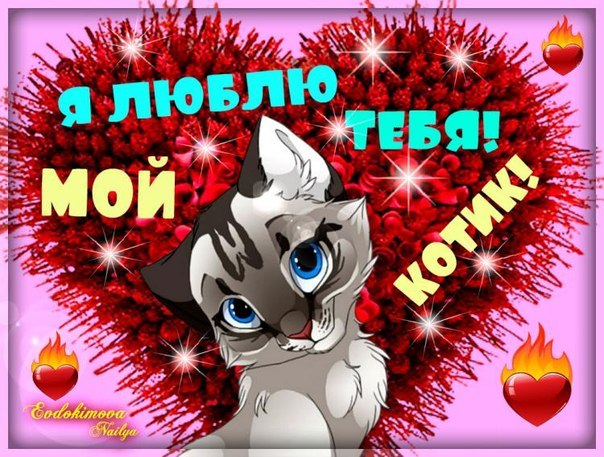 картинки я тебя люблю мой котик