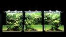 【ギャラリーAaMo】ギャラリーAaMo 巨大ネイチャー水草ウォール. Full HD