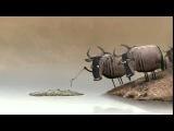 Антилопа гну / Wildebeest