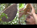 Primitive Technology Giant honeycomb in the forest vs drink honey there Wilderness Technology