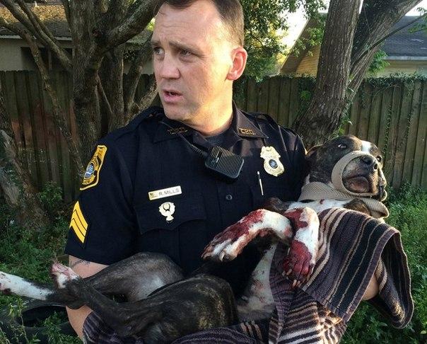 Полицейский несёт раненную собаку, которая была найдена привязанной к железнодор...