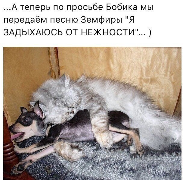 https://pp.userapi.com/c845323/v845323471/4f6df/Ml9pc0BBYSM.jpg