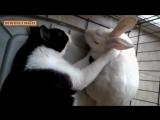 Кролики - смешные и милые зайчики. Видео Подборка - _NEW HD_ ( 480 X 854 ).mp4