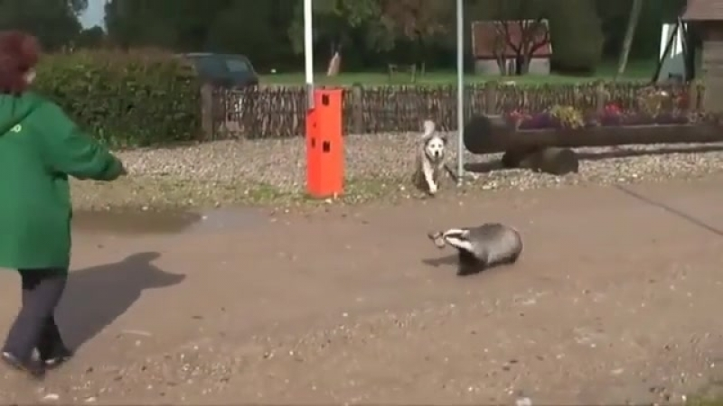 Верный пес идет на помощь