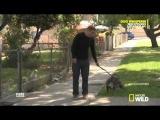 Переводчик с собачьего. 8 сезон - эпизод 5 часть 4 (DOG WHISPERER S8 EPI 5 part 4)