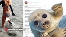 Зимние русалки вновь удивили Владивосток Мороженки