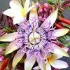 Курсы по Сахарной флористике, сахарные цветы
