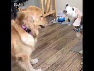 Когда пытаешься с ней поговорить но она еще злится