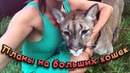 С ЛАПОЙ ПУМЫ ЧТО ТО СЛУЧИЛОСЬ Планы на больших кошек Буду ли я забирать собак