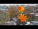 Осень дождь футажи скачать бесплатно footage hd