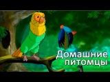 Развивающие мультфильмы Совы - Мои Домашние Питомцы - Попугай