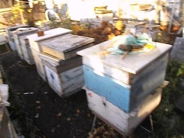 15 октября - отбираю мед и готовлю пчел к зимовке - тестовые семьи