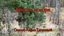 Краски ноября 💕 Красивая музыка Эдгара Туниянца - Стихи: Л. Тагановой