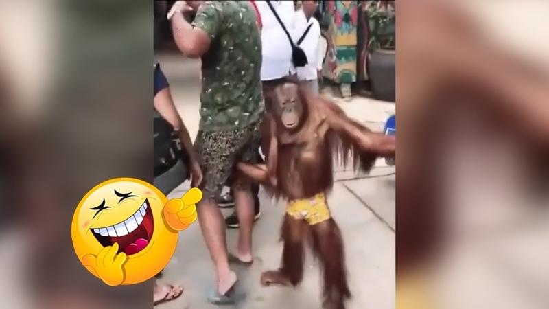 افضل فيديو مضحك 😂 تجميعه تحدي الضحك 31