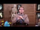 The Nervous System, Part 1- Crash Course AP 8