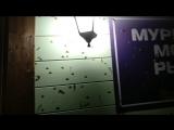 Аномальное нашествие мотыльков в Мурманской области