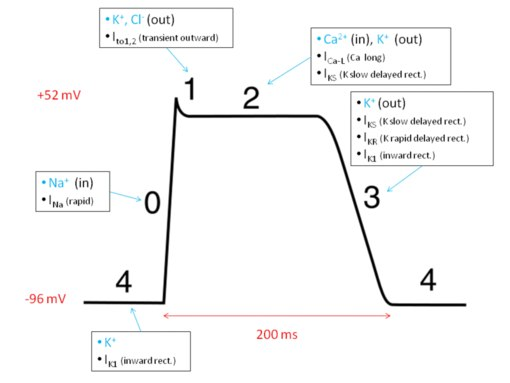 If-каналы синусного узла,