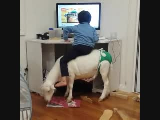 Excited kid watching cartoons while sitting on a green underwear wearing goat that is tearing up a book. enjoy!