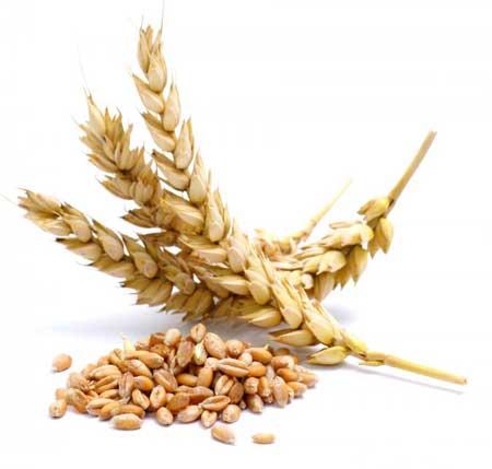Пшеница содержит глютен.