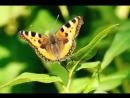 Национальный парк Таганай Бабочки