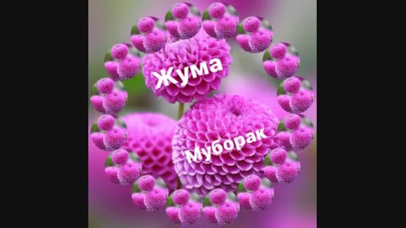 2_5271888681563586859.mp4