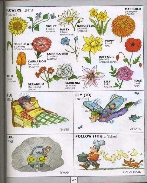 цветы на английском языке инфограффика