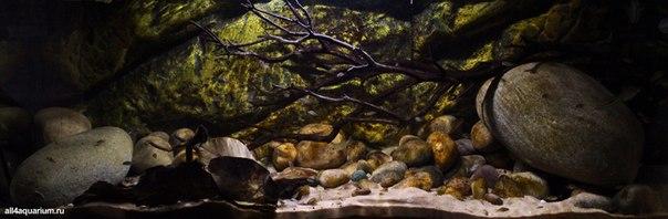Конкурс дизайна биотопных аквариумов JBL 2014 XAuP2ijL2yk