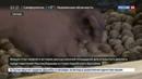 Новости на Россия 24 • От туризма до высоких технологий: Гренаде и РФ есть чем поделиться друг с другом