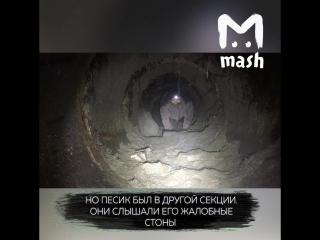 Ребята сняли на камеру, как спасают щенка из подземелья