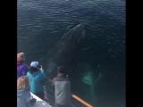 Даже киты здороваются, а вы, сволочи - нет!