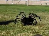 Самый большой в мире паук!!! The World's Most Giant Killer Spider!!