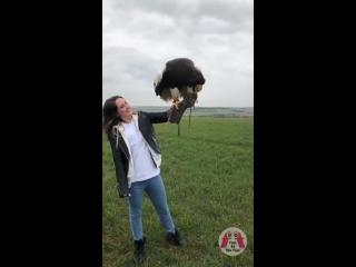Ручной орёл