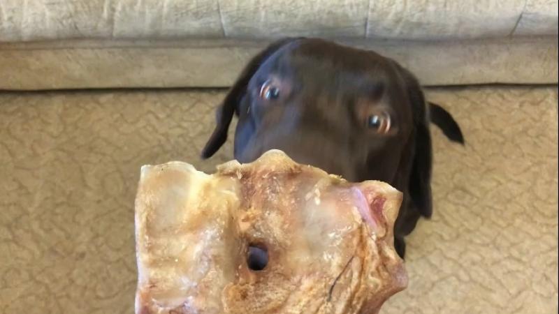Собака с говяжьим ухом (наши покупатели)
